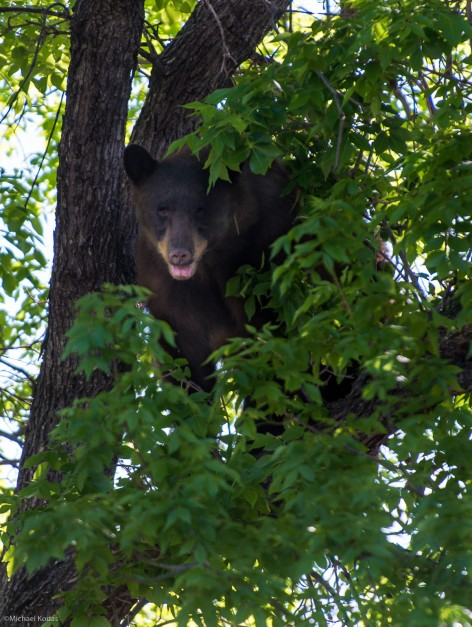 A Bear came to Campus and got an Education